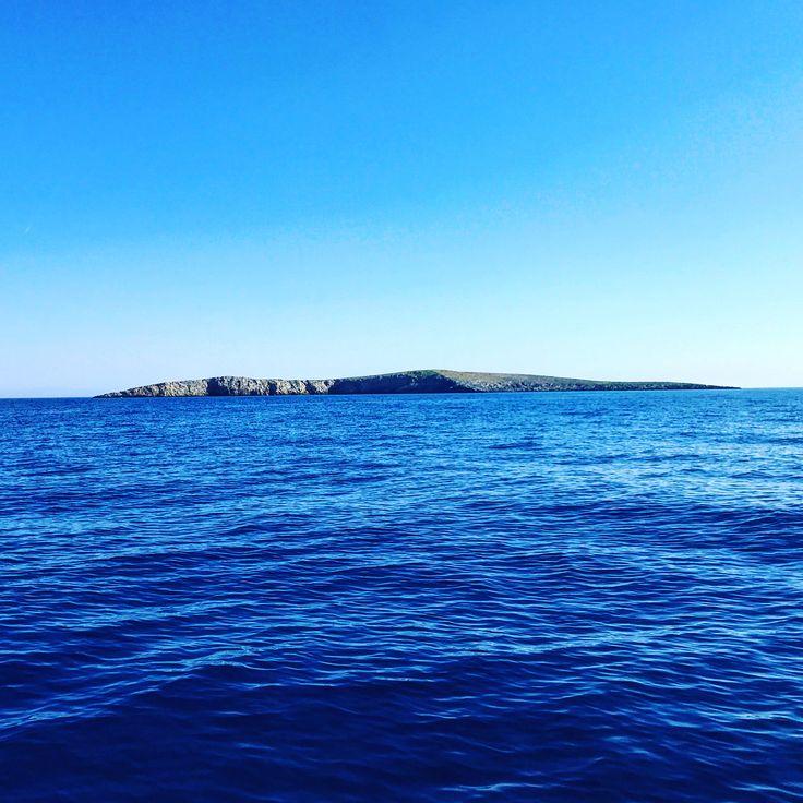 LEVITHA| the last outpost of europe where the podarcis blue like the sea . . . #ucmerced #bobcatsingreece #twoherpqueens #natgeoexplorer #herpetology #islands #greece #research #fieldwork #lizards #podarcis #ladeda #πάμε #Κυκλάδες #amorgos #cyclades #kiklades #SavraWoman