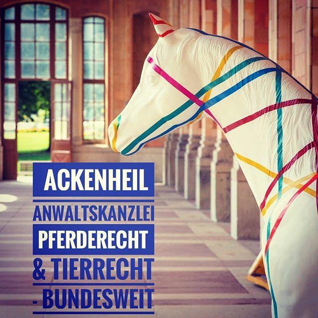 PFERDEKAUF / Rücktritt vom Pferdekauf aufgrund Röntgenbefund - Rückgabe und Schadenersatz .. #anwaltfürpferderecht #ackenheil  #pferdekaufvertrag #pferderechtwiesbaden #pferderechtmünchen #kanzleifürpferderecht #kanzleitierrecht - bundesweite Rechtsberatung. #munich #pferd #münchen #düsseldorf #frankfurt #berlin #stuttgart #hamburg .. #nrw #bayern .. bundesweit  Http://www.tierrechtskanzlei.de  #ackenheil #kanzleitierrecht #spezialistfürtierrrecht