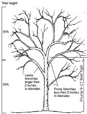 23 best science classification images on pinterest life science science lessons and science - Growing french walnuts for a profit ...