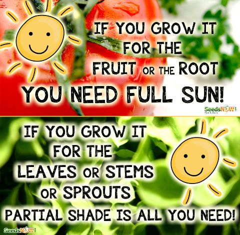 How much sun does a particular fruit or vegetable need?  Heres a great rule of thumb from Grow Food, Not Lawns