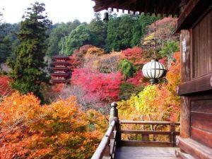 kamakura#鎌倉#長谷寺#紅葉#日本最大木造観音像
