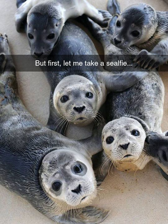 Funny Seals #First, #Sealfie
