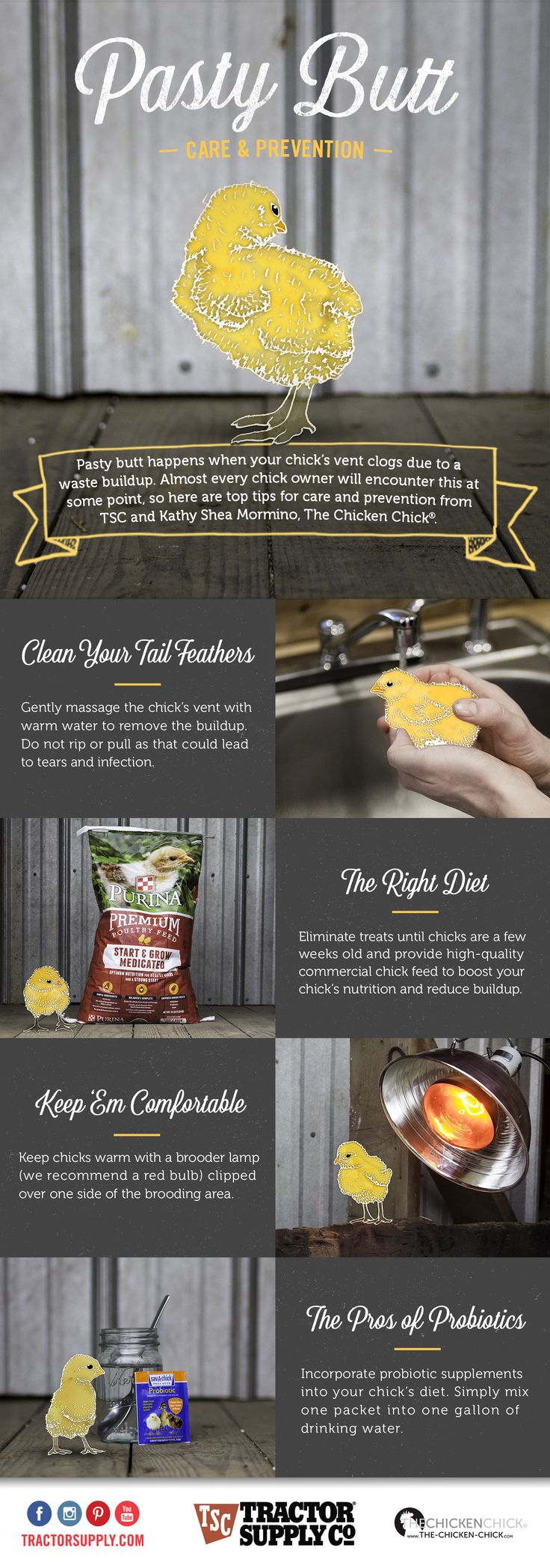 26 best chickens images on pinterest raising chickens pet