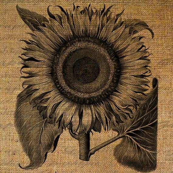 Sunflower Flower Large Digital Image Download Sheet by Graphique