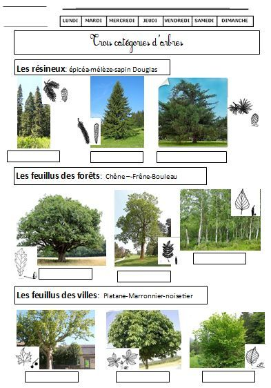 Les catégories d'arbres DDM CE1