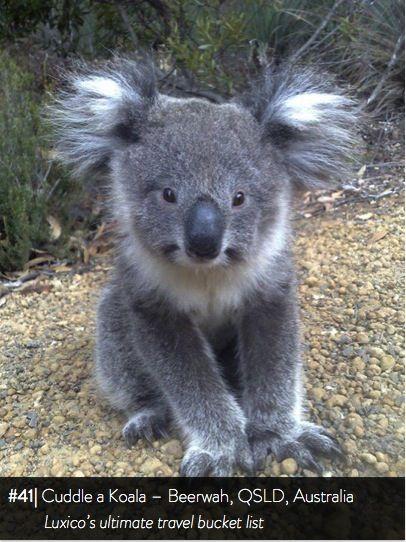 Cuddle a Koala, Beerwah, QSLD - Luxico's ultimate travel bucket list #41