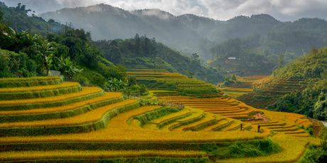The rice terraces set amid the swirling clouds around the Vietnamese hill station of Sapa are truly eye watering....