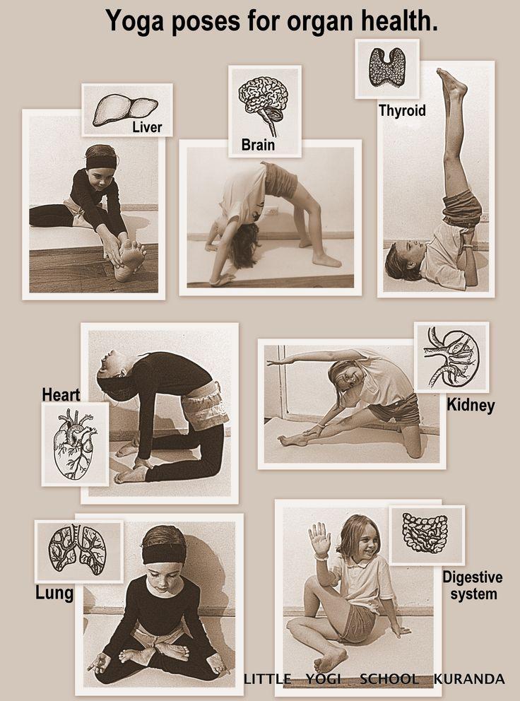 Yoga poses for organ health.