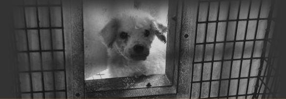No pet store puppies