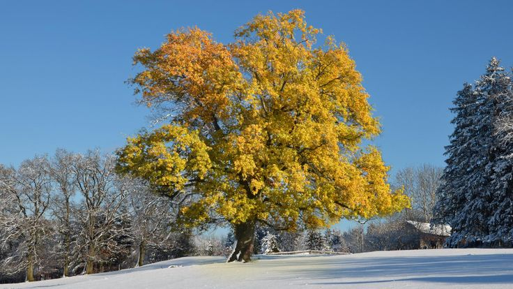 nice snow in late autumn