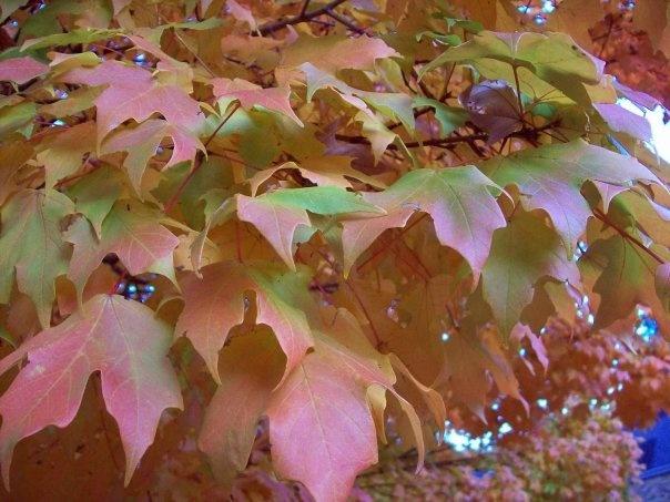Fall Leaves: Photo