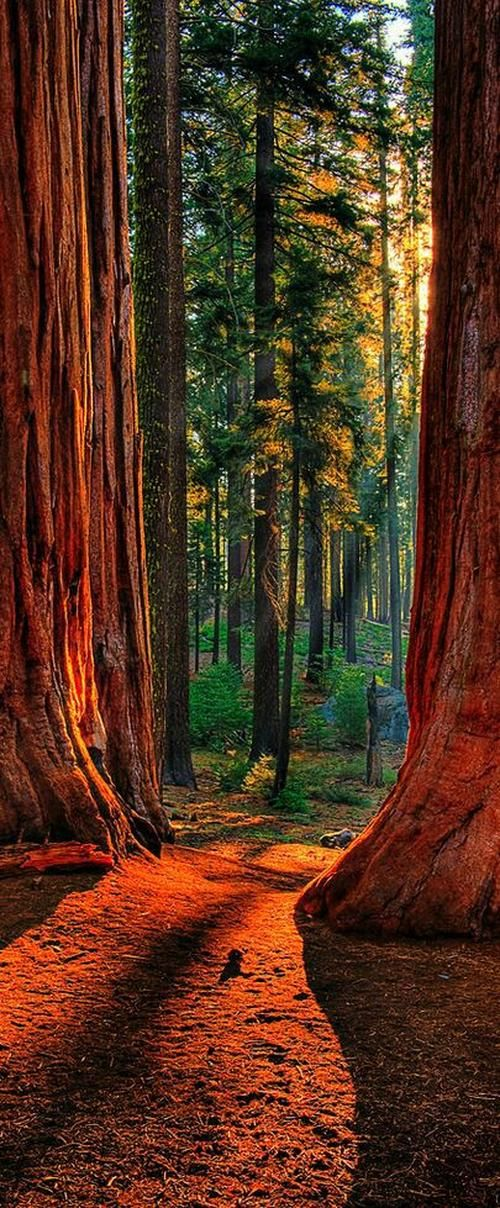 Plan your trip to the Sequoia National Park using TripHobo Trip Planner.