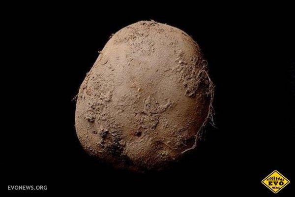 Фото картошки за 1 миллион долларов http://evonews.org/kartinki/interesnie-kartinki/6578-foto-kartoshki-za-1-million-dollarov.html   Эта фотография картофеля на чёрном фоне была продана на аукционе за 1 миллион долларов. У меня всё.