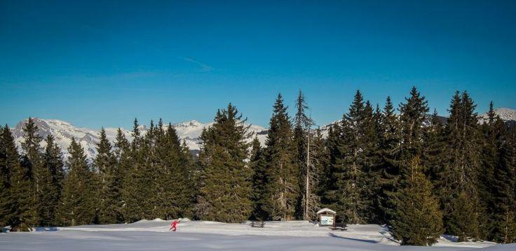 whitexperience - crosscountry ski