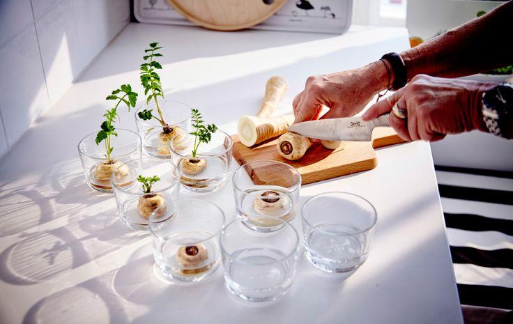 5 légumes à faire repousser. Même après avoir été nettoyés pour une salade ou hachés pour un sauté, les légumes ont encore du potentiel. Voici 5 de nos légumes préférés à replanter.