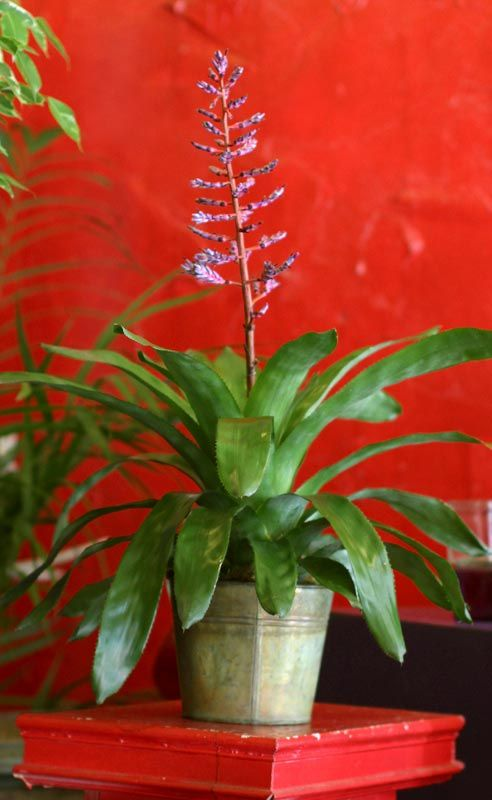 332 best beauty of house plants images on pinterest plants flowers and indoor plants