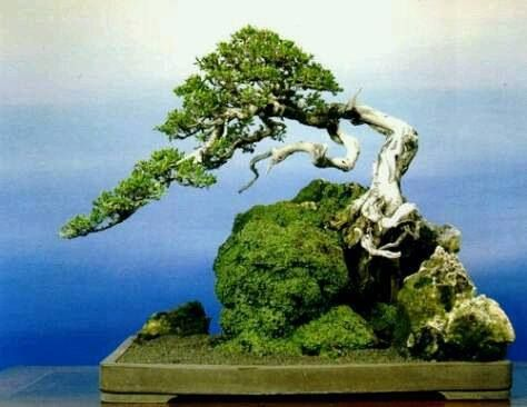 This is the most person-like bonsai I've found. http://dldiehl.com #bonsai #tree #figurative #illustration #characters