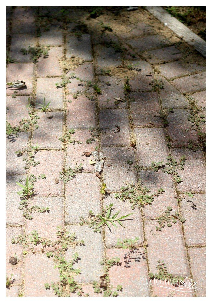 The best way to naturally kill your weeds—hands down  Find it on http://Papr.Club as a Monthly Subscription