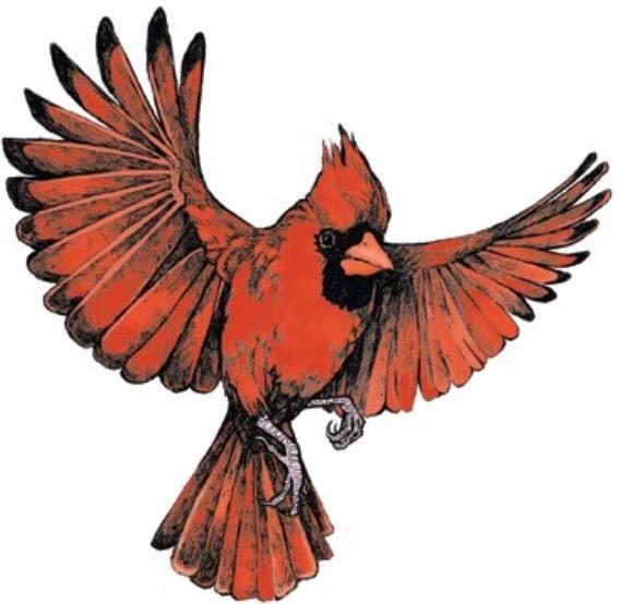 Flying cardinal | Tattoo ideas | Pinterest | Cardinals