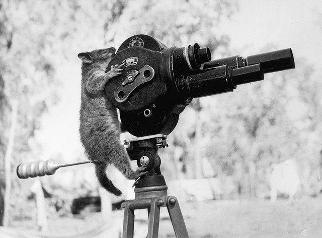 Australian War Memorial. how about the movie-making possum