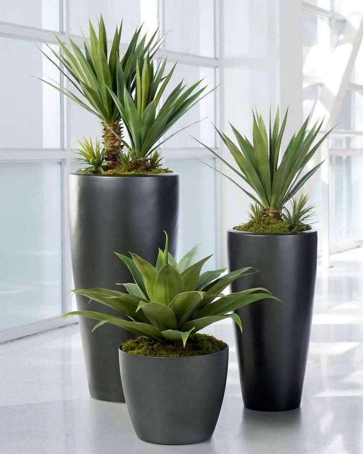 Nice 30+ Awesome Indoor Plant Display https://modernhousemagz.com/30-awesome-indoor-plant-display/