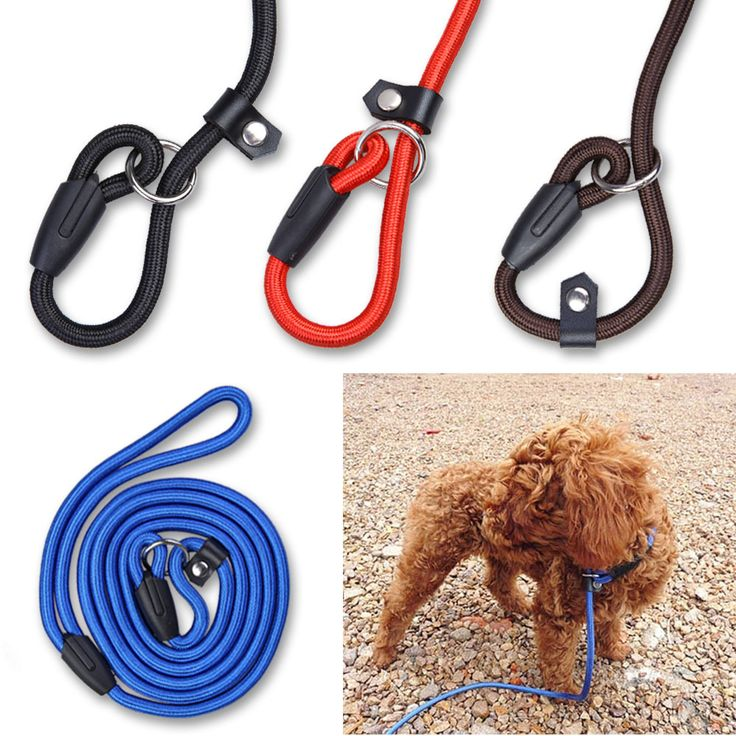 Pet Dog Nylon Adjustable Training Lead Dog Leash Dog Strap Rope Traction Dog Harness Collar Leash Hi Mommy! - All Discounted Baby Stuff. #babyproducts  ‪#‎babycare‬