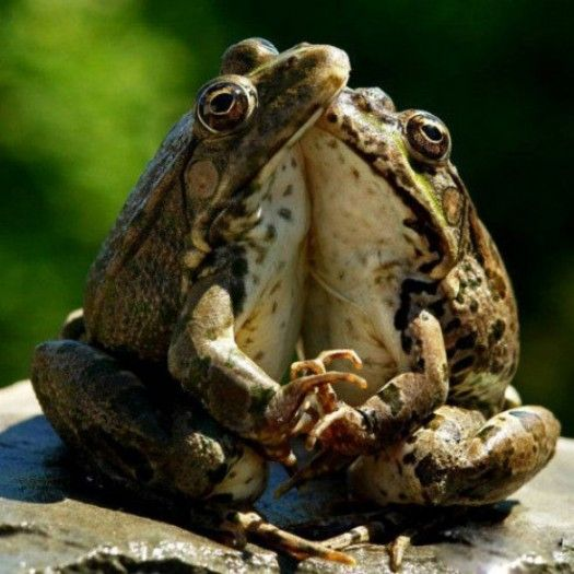 Holding handsLets Dance, Funny Animal Pictures, True Love, Sweets Animal, Funny Animal Photos, Frogs, Romantic Moments, Animal Funny, Holding Hands
