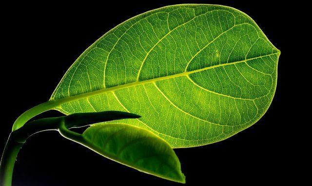 Descubren mecanismo vegetal que corrige los defectos de plegamientos de las proteínas