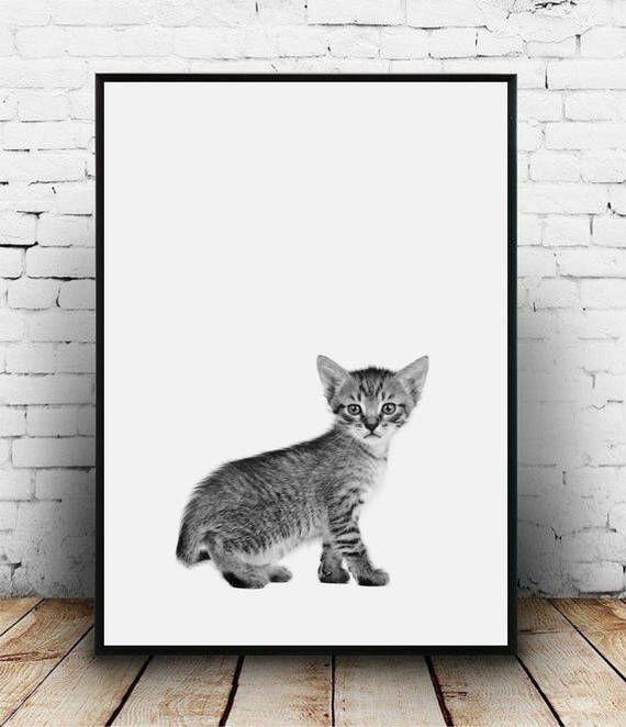 Baby kitten print, Kitten poster, Kitten nursery decor, Nursery kitten print Kitten photo Kitten wall art Cat printable Nursery animal print by homelyspace on Etsy https://www.etsy.com/au/listing/553167385/baby-kitten-print-kitten-poster-kitten