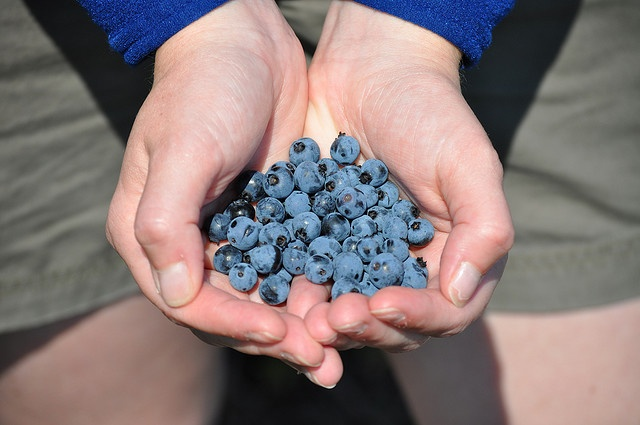 i love to live in st. john's, newfoundland because i'm within walking distance to delicious blueberry patches.