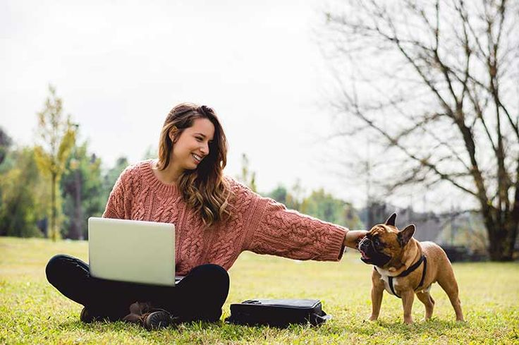Online Classes With Animal Behavior College