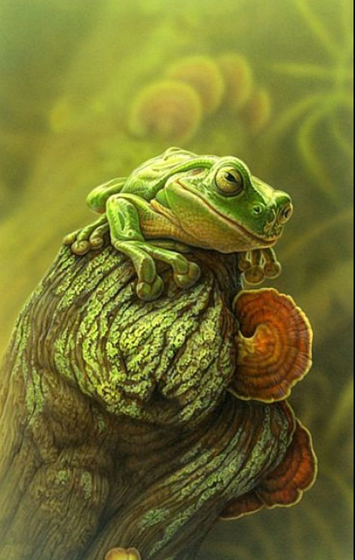 26 best frogs images on pinterest frogs frog art and animals