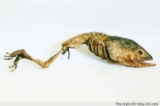 Otro pez con patas.