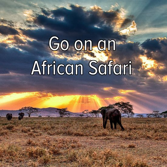 Bucket list: travel to Africa and go on a safari adventure! Always been my dream!  Check out for more stuff at  http://pinterest.com/milaishop/