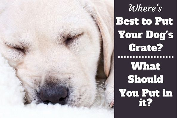 You need to know what to put in a dog crate and where to put it to make it a comfortable, enticing and welcoming place where your dog loves to spend time.
