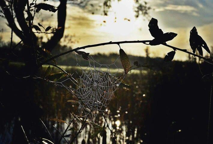 Spider was here