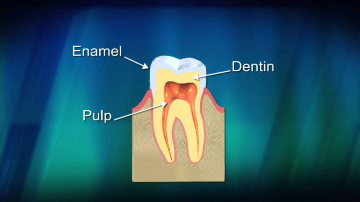 Learn more about what the American Dental Association has to about what makes up the tooth.