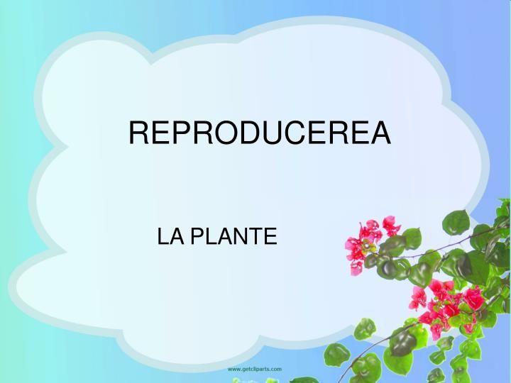 reproducere varicoză