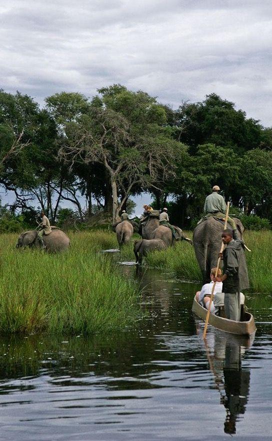 Safari Elephant, Okavango Delta, Bostwana