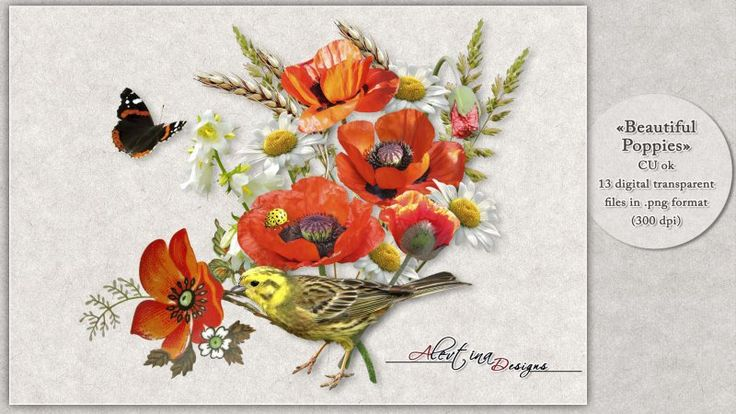 """A beautiful pack """"Beautiful poppies"""" by Alevtina Designs. This pack contains 13elements for CU, PU and S4H! Think of consulting the TOU.(Not For Freebie) All in 300 dpi and png format. You can use them as part of your digital kits."""