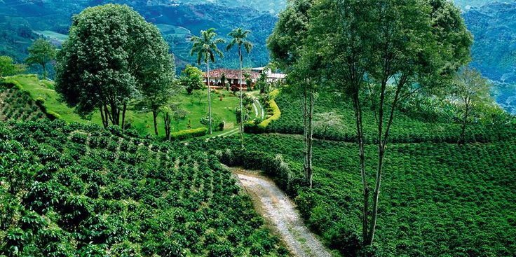 The Colombian Coffee Cultural Landscape @See Colombia from ...