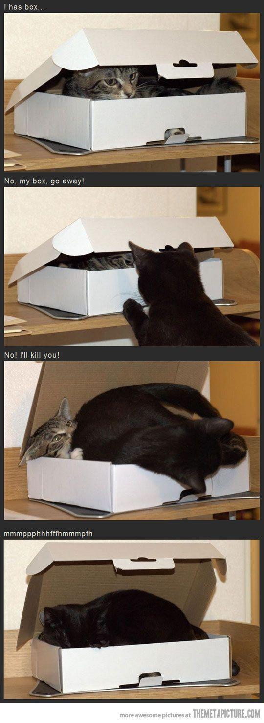 Love kitties :)