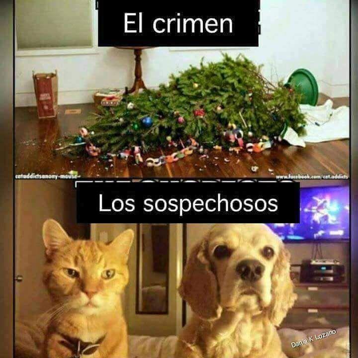 CHICAS MASAJISTAS XXX MAS