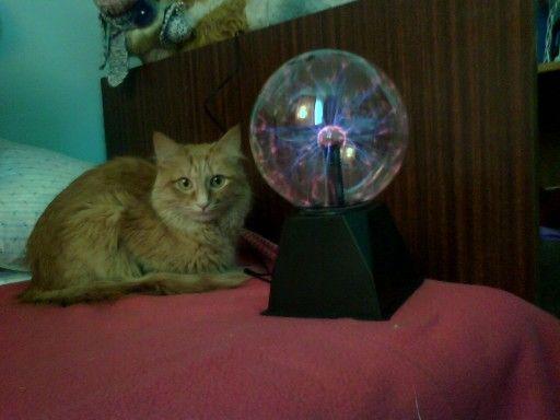 Кошка и плазменный шар.