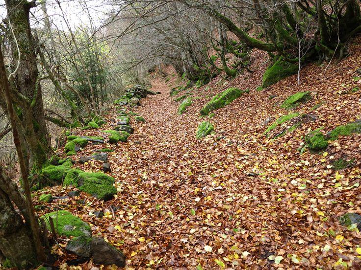 Ruta pel Bosc de Carlac