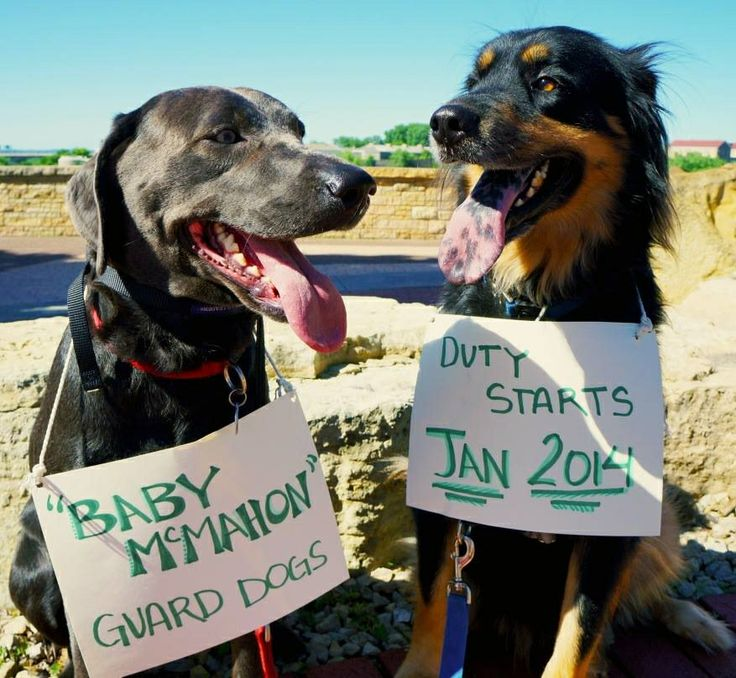 Guard dog baby announcement we did for upcoming bean :)