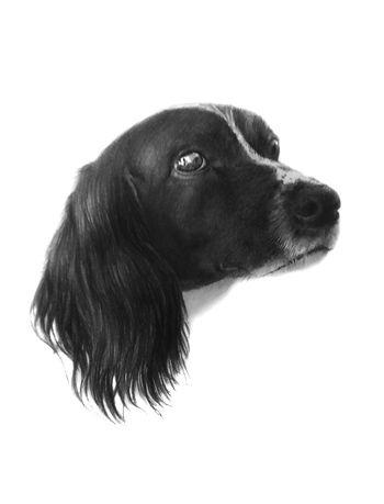 Another Beautiful portrait from http://www.yasminedavey.co.uk/