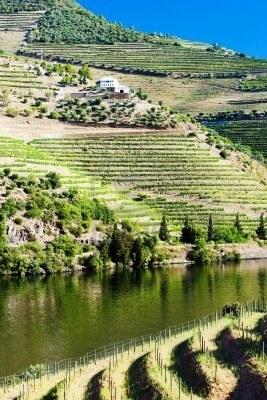 vineyars en el valle del Douro, Portugal El vino de Oporto se produce en los viñedos de la Región vitícola del Alto Duero, en Portugal.
