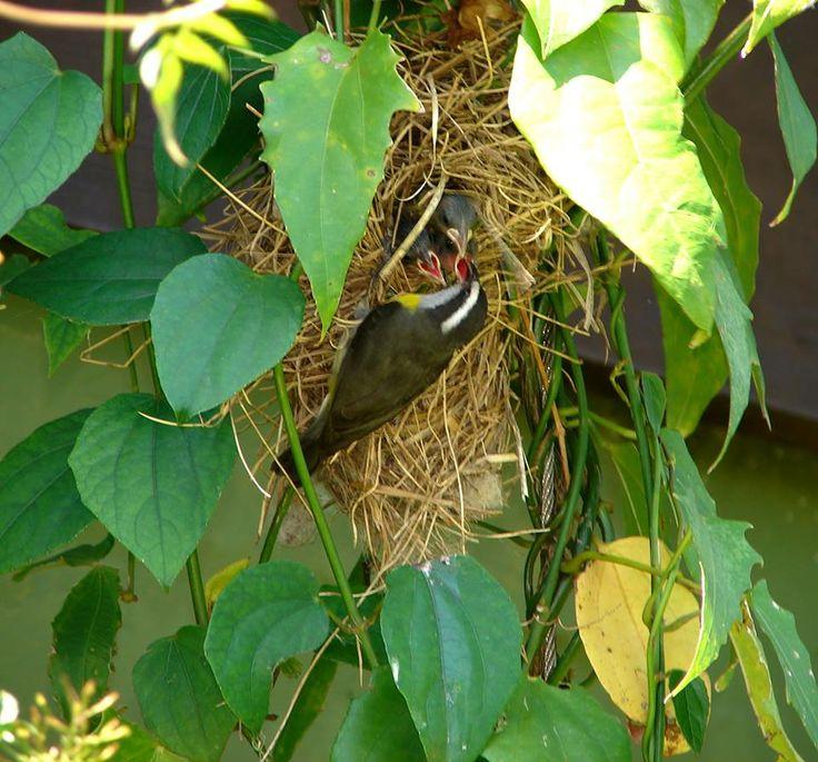 Um ninho de pássaros em nosso jardim. Uma maneira incrível de estimular a biodiversidade!
