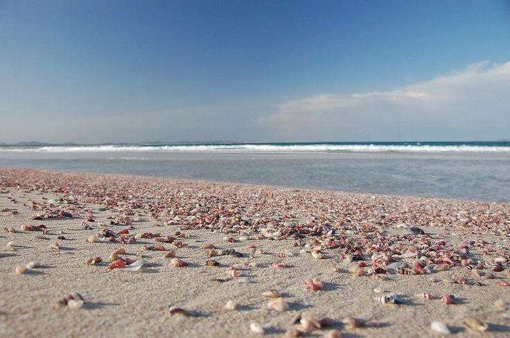 Spiaggia di conchiglie, Australia Occidentale